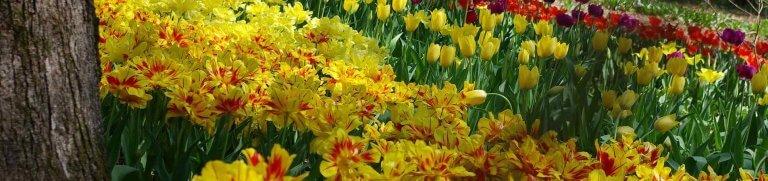 botanische garten saint cyprien